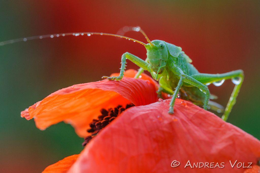 Wirbellose Tiere (Invertebrate)