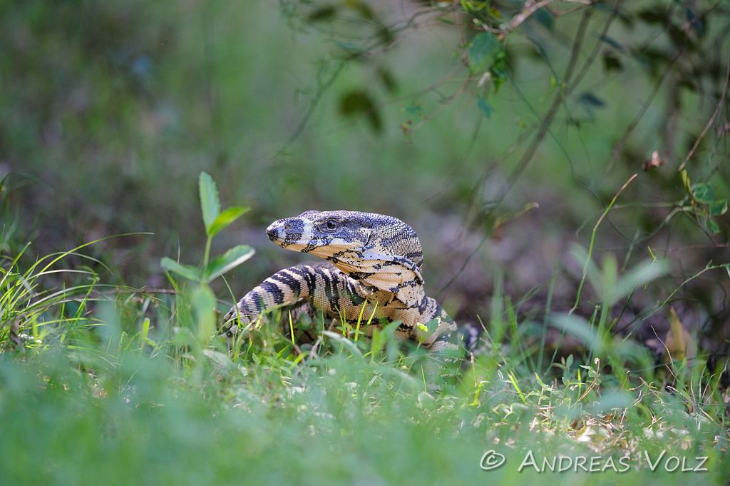 Reptilien103.jpg