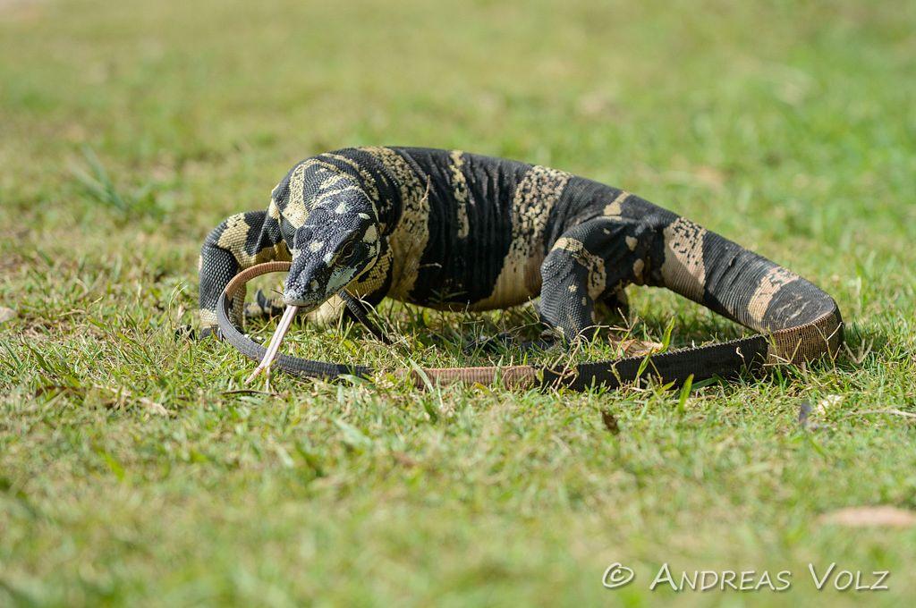 Reptilien104.jpg
