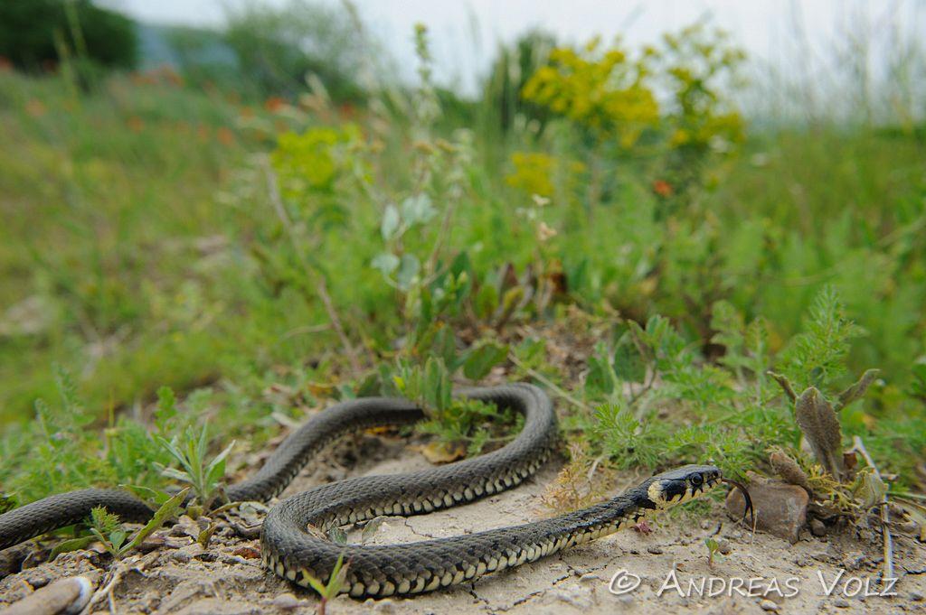 Reptilien85.jpg
