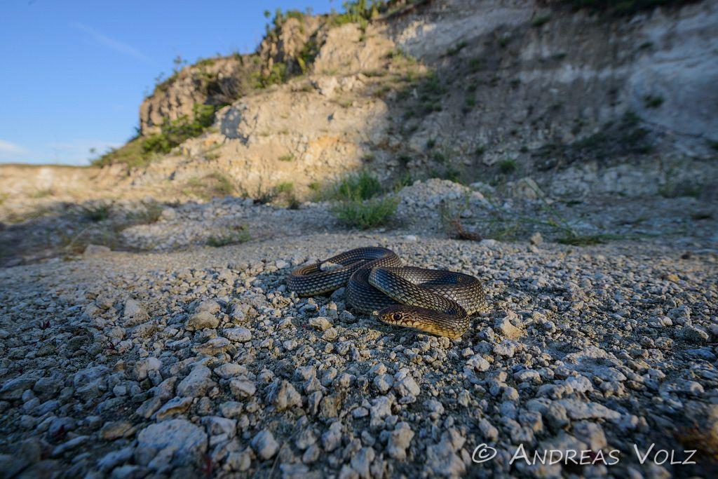 Reptilien130.jpg