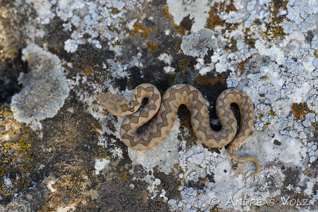 Reptilien116.jpg