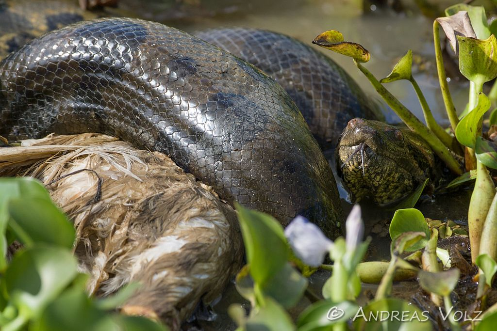 Reptilien37.jpg