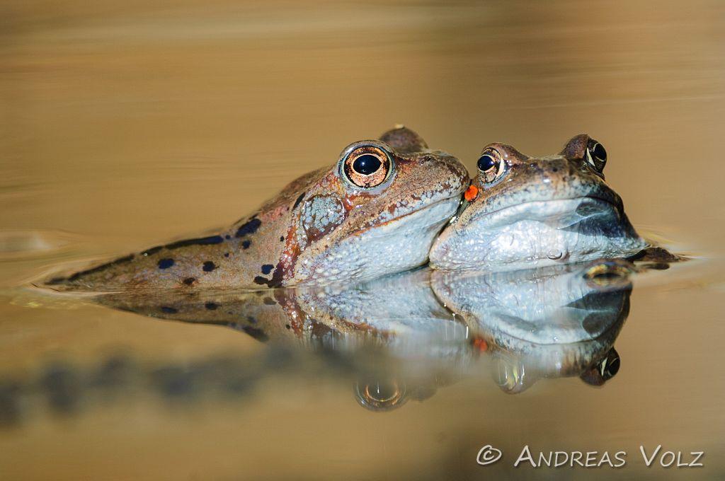 Amphibien (Amphibians)