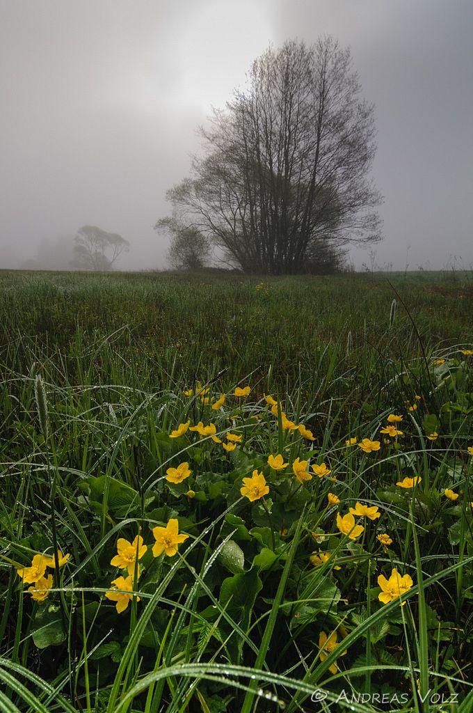 Landschaft305.jpg