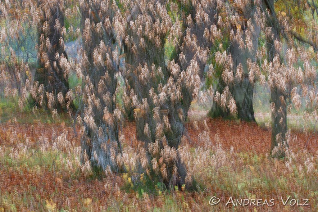 Pflanzen104.jpg