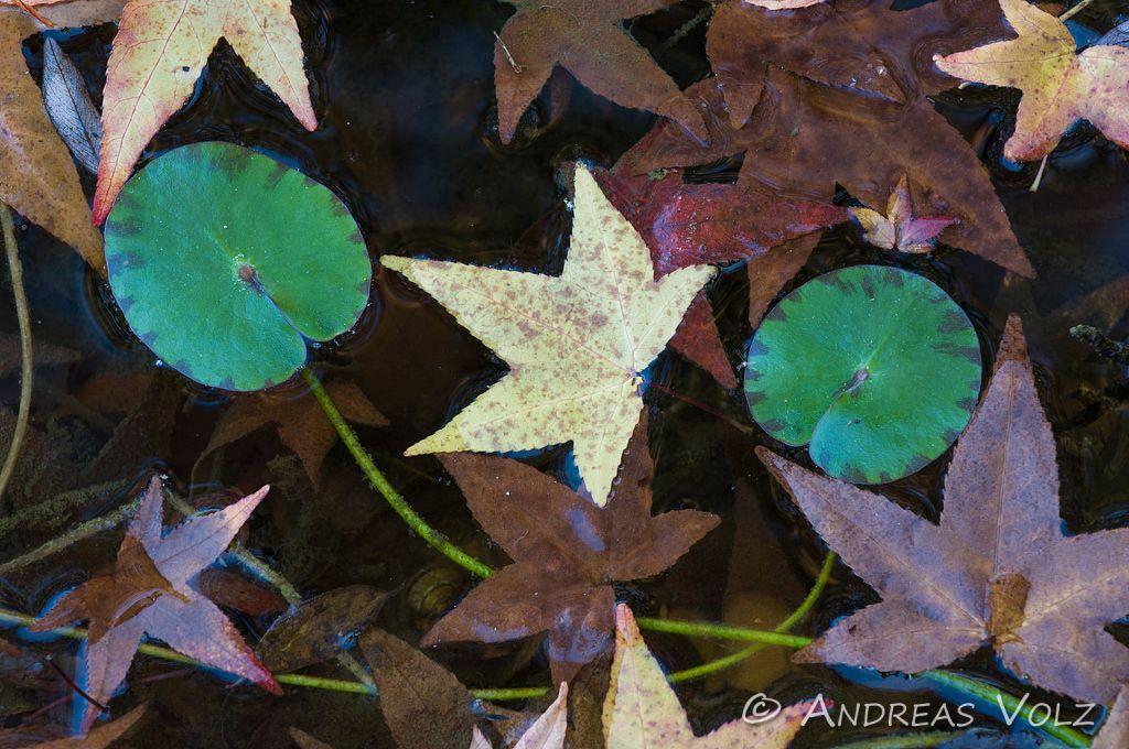 Pflanzen365.jpg