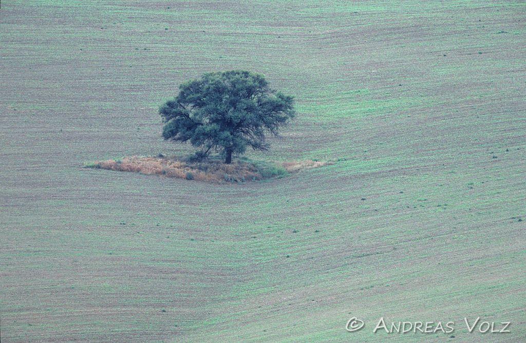 Landschaft58.jpg
