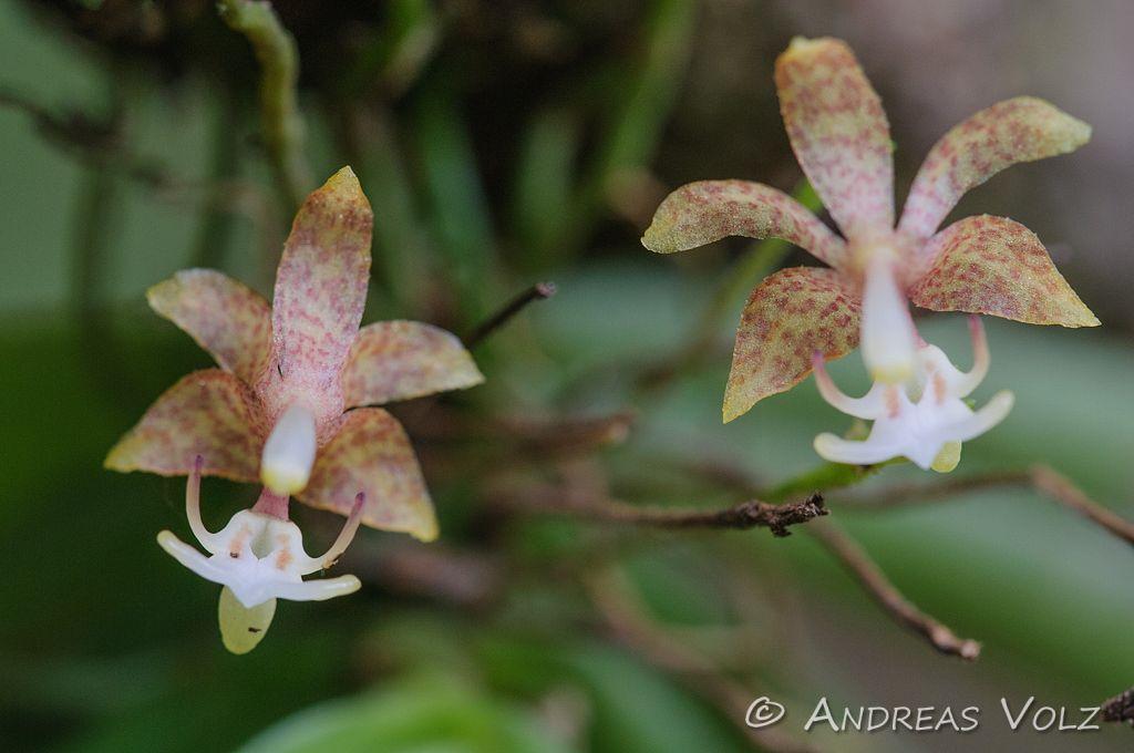 Pflanzen381.jpg