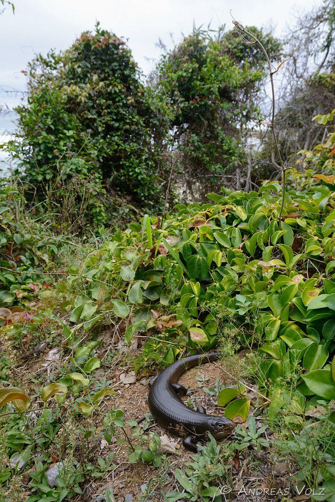Reptilien101.jpg
