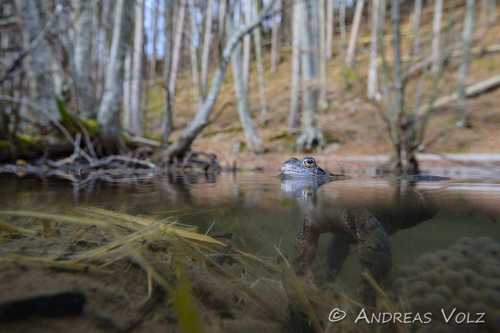 Amphibien124.jpg