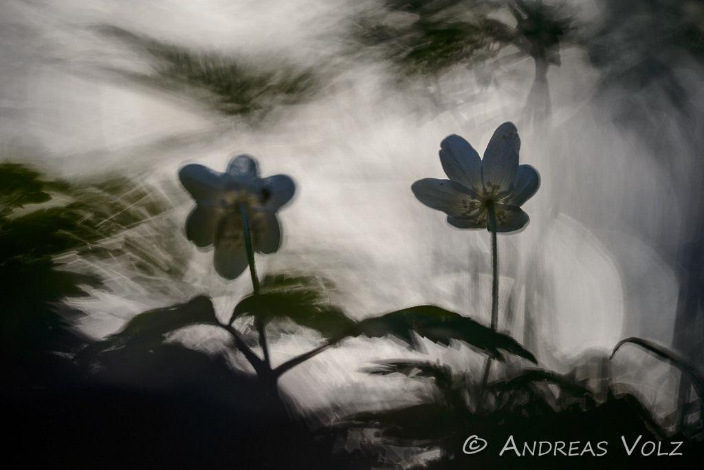 Pflanzen675.jpg