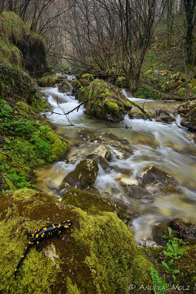 Amphibien158-stack.jpg