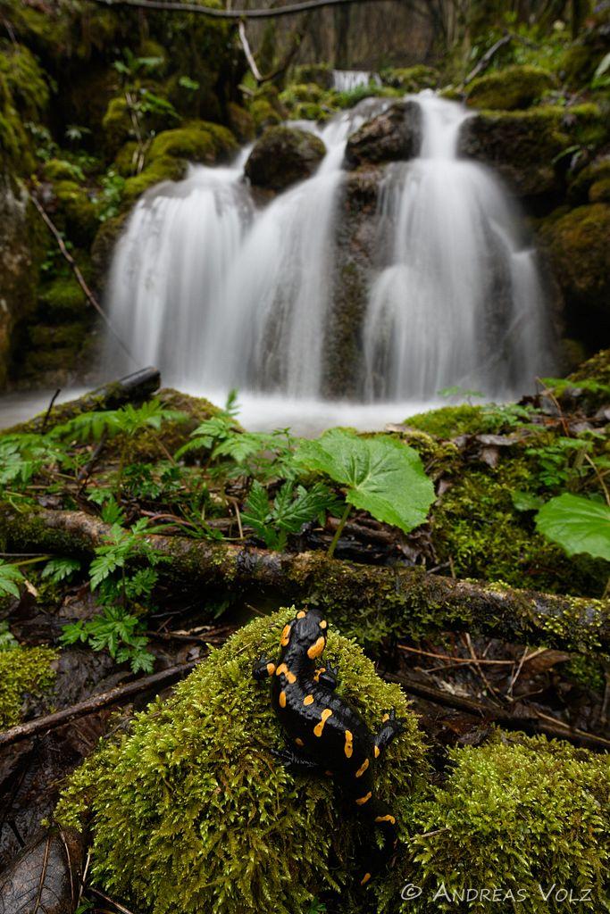 Amphibien153.jpg