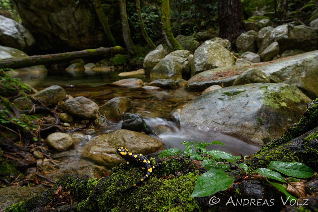Amphibien168.jpg