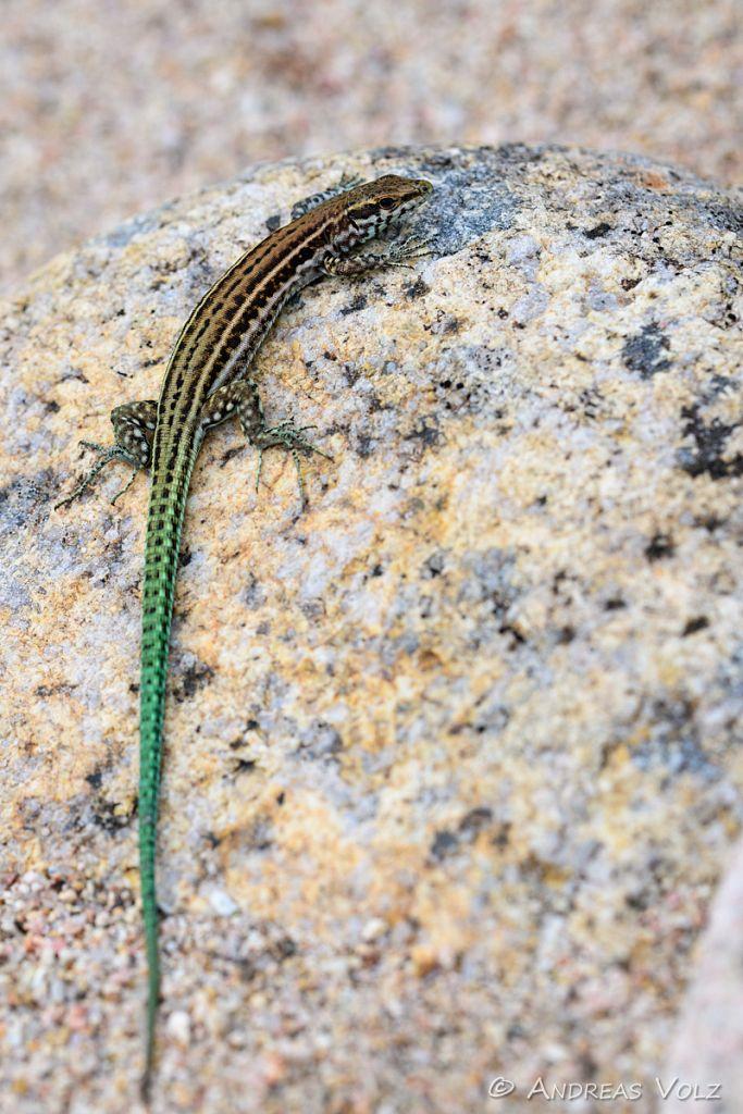 Reptilien229.jpg