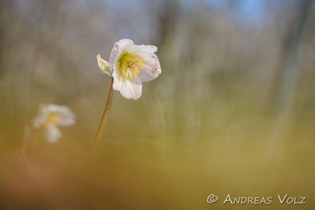 Pflanzen918.jpg