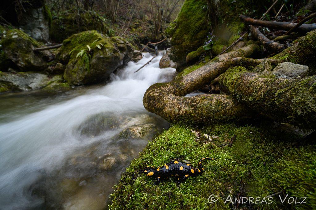 Amphibien155.jpg