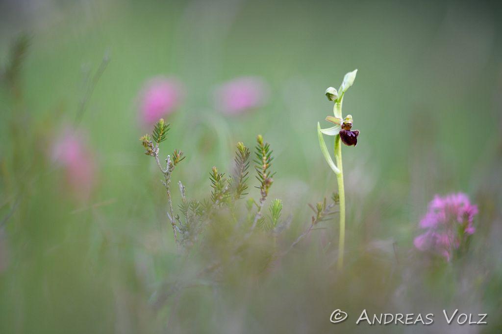 Pflanzen1022.jpg