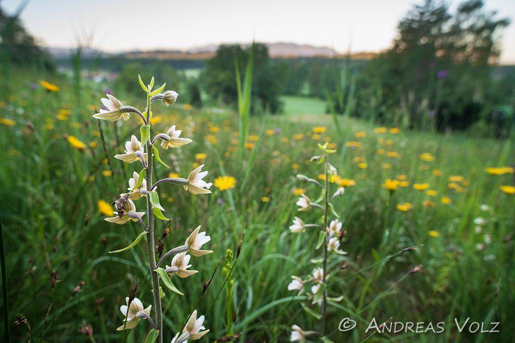 Pflanzen1028.jpg