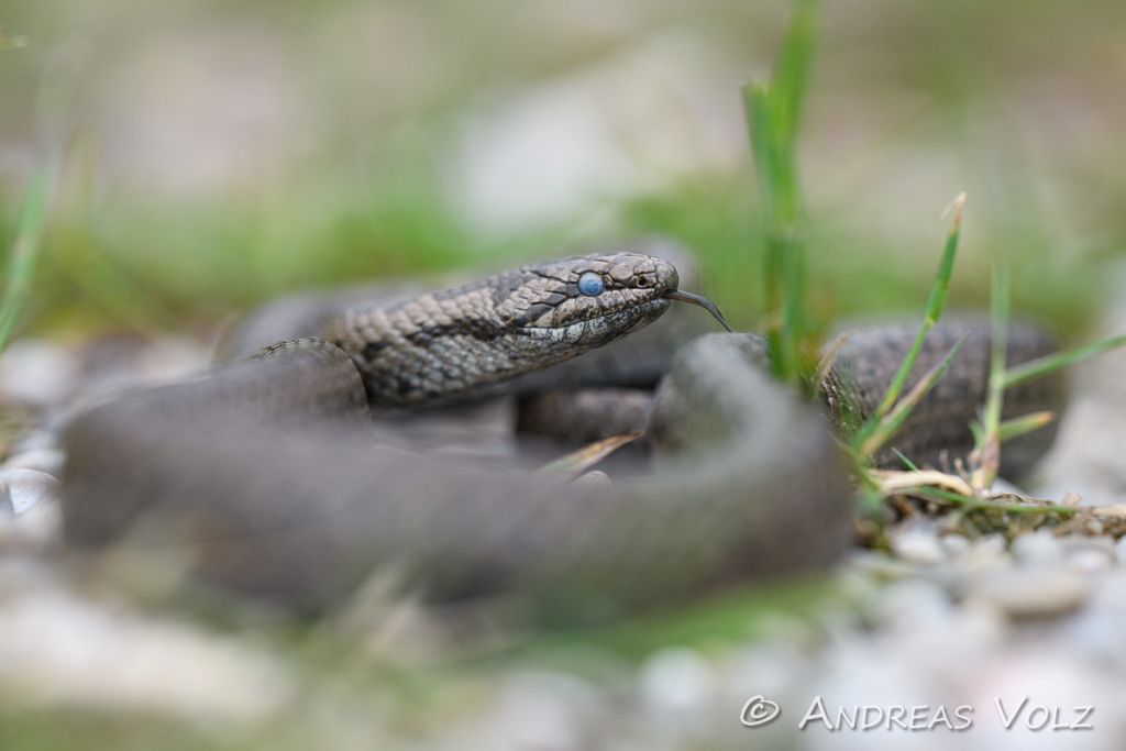 Reptilien270.jpg
