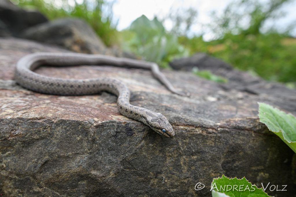 Reptilien272.jpg
