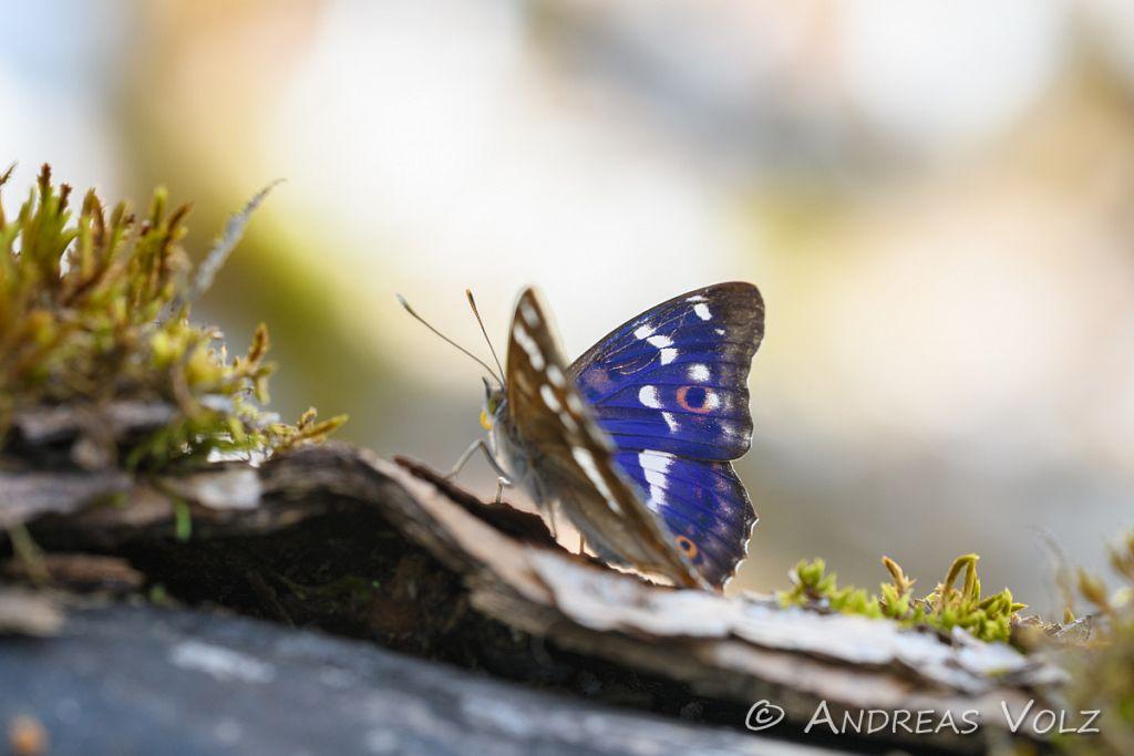 Arthropoden895.jpg