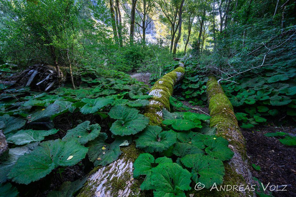 Landschaft2312.jpg