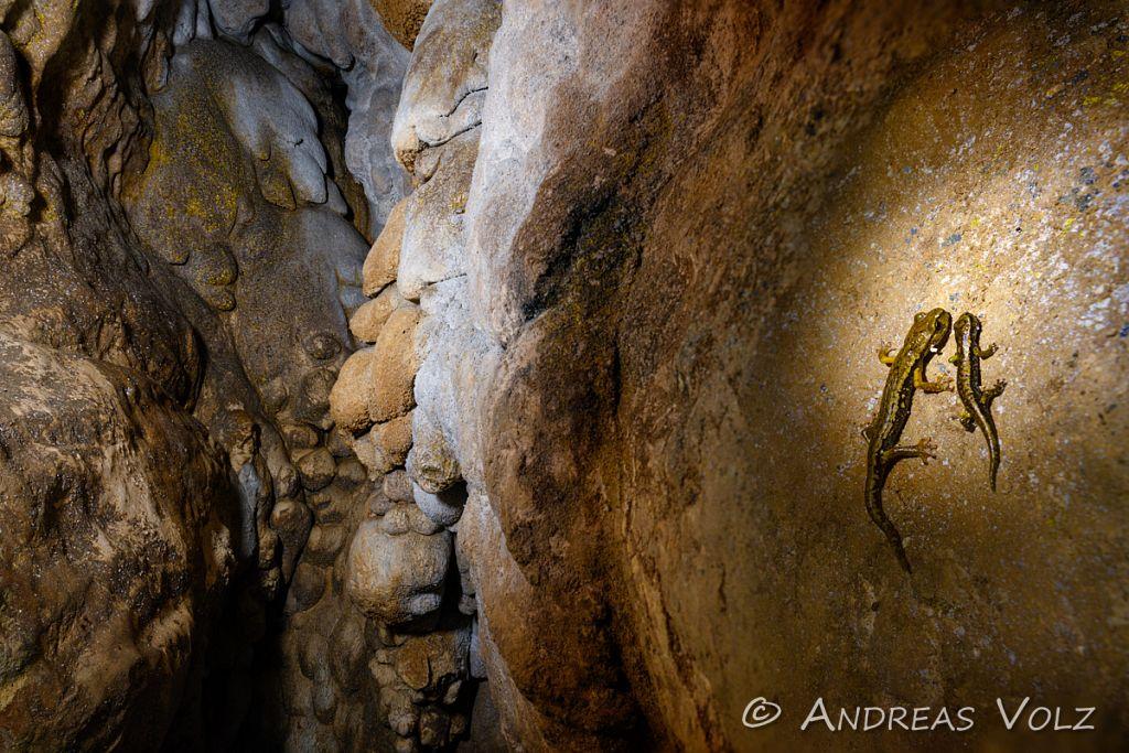 Amphibien233-stack.jpg