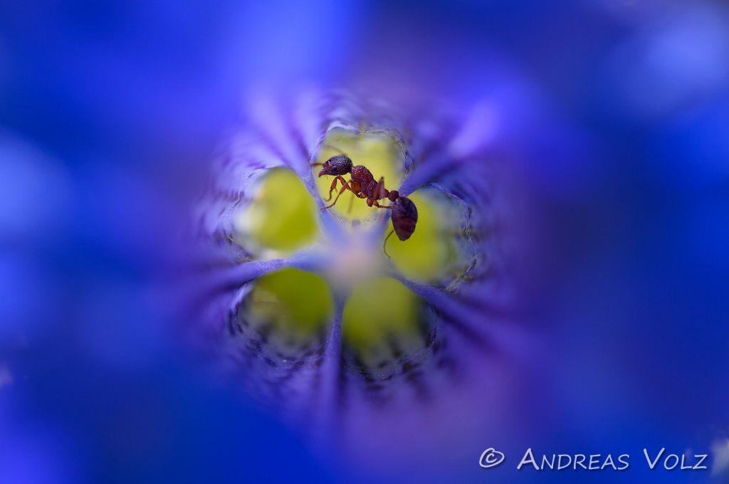 Arthropoden391.jpg