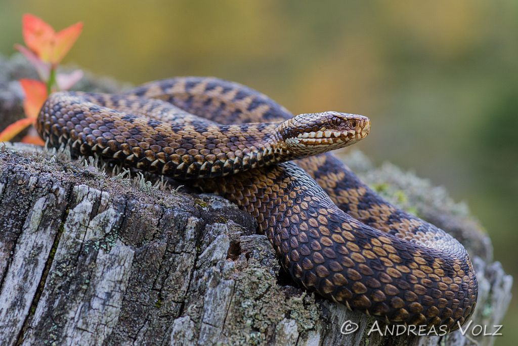 Reptilien20.jpg