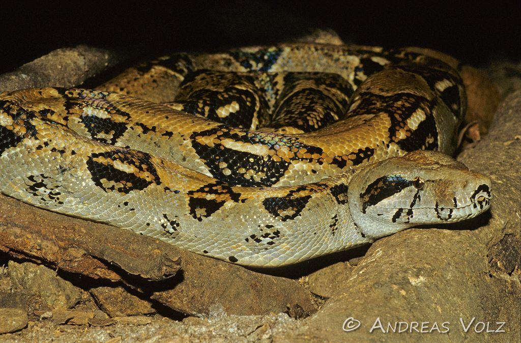 Reptilien22.jpg