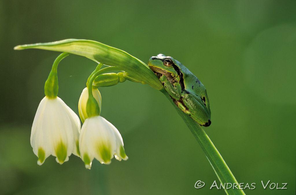 Amphibien1.jpg