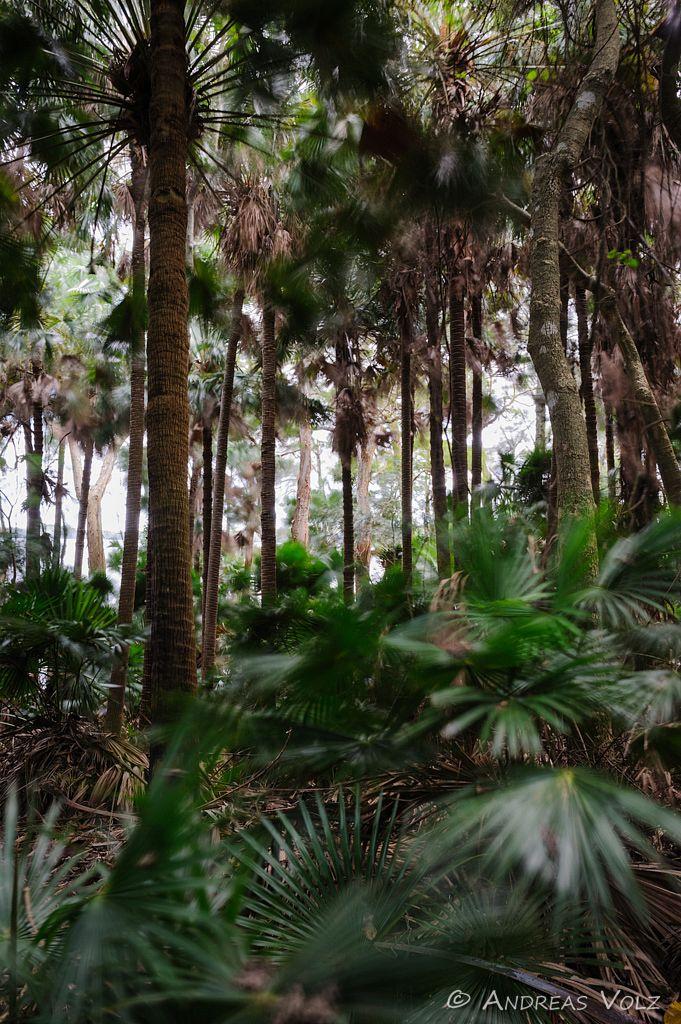 Landschaft606.jpg
