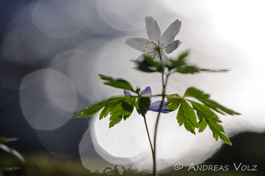 Pflanzen524.jpg