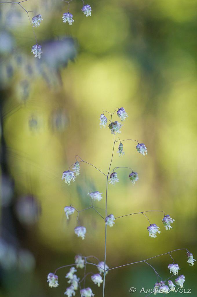 Pflanzen435.jpg