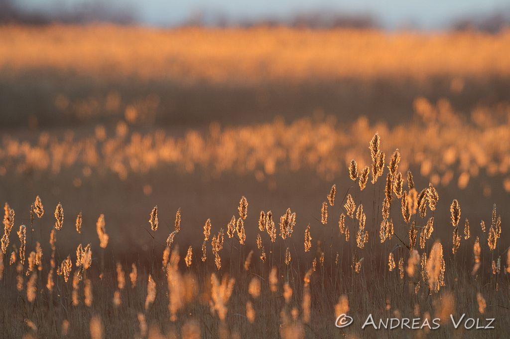 Landschaft322.jpg