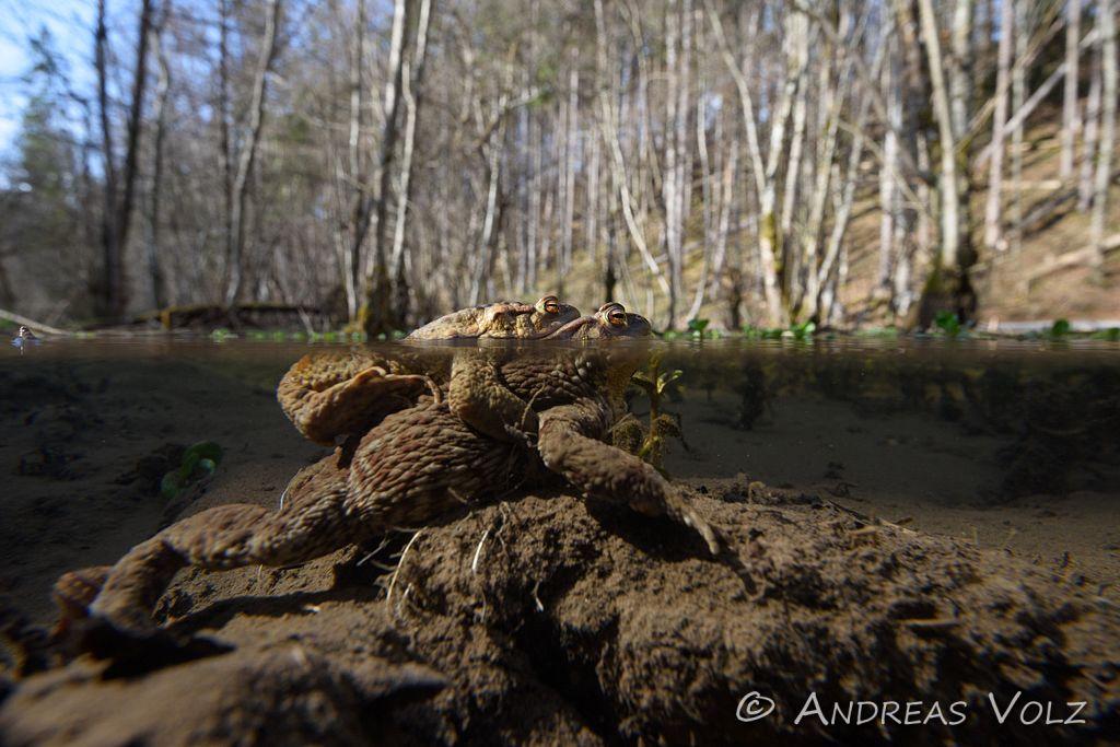 Amphibien131.jpg