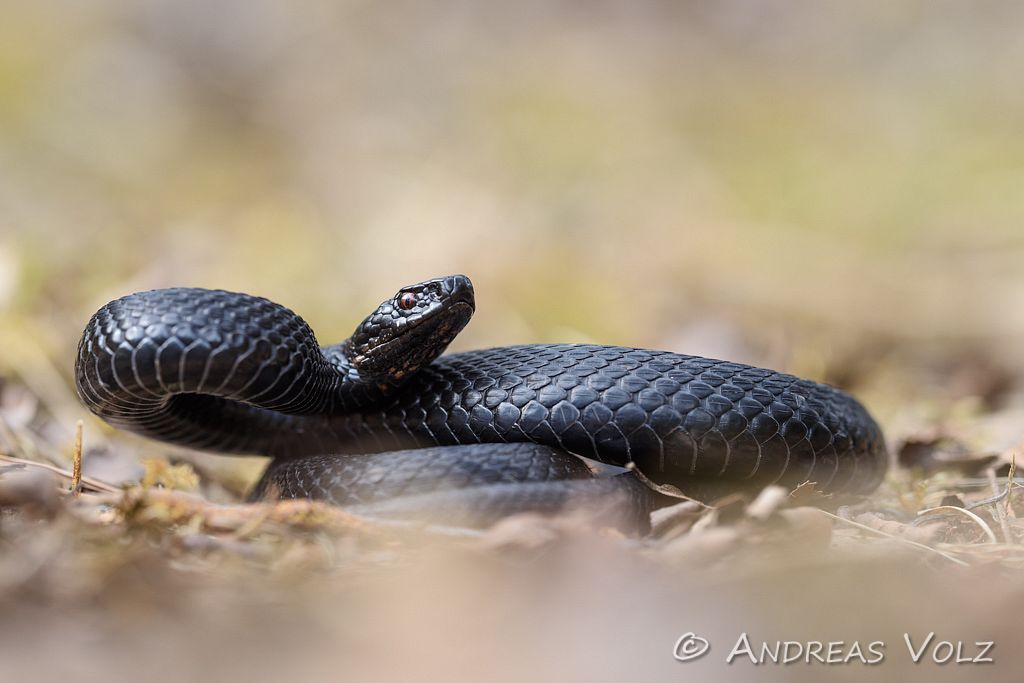 Reptilien166.jpg