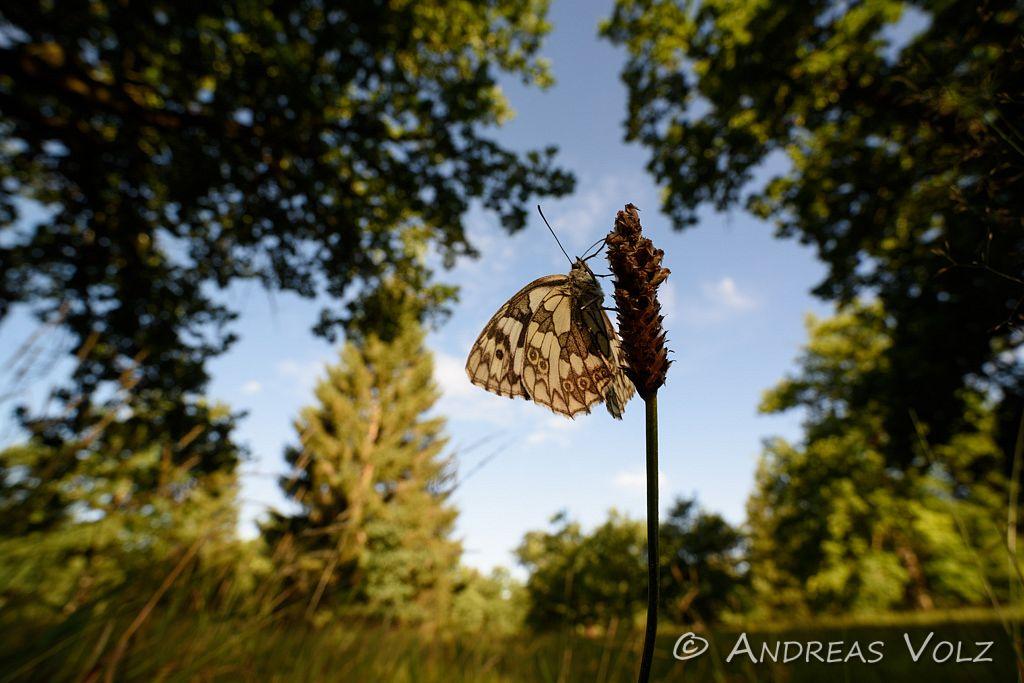 Arthropoden616.jpg