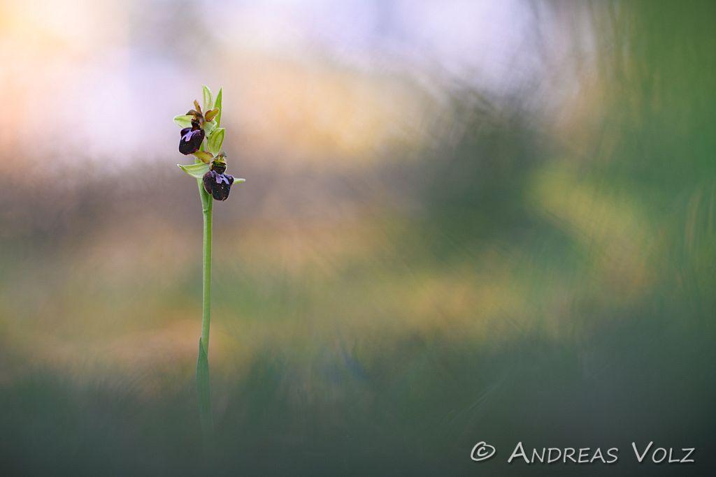 Pflanzen1013.jpg