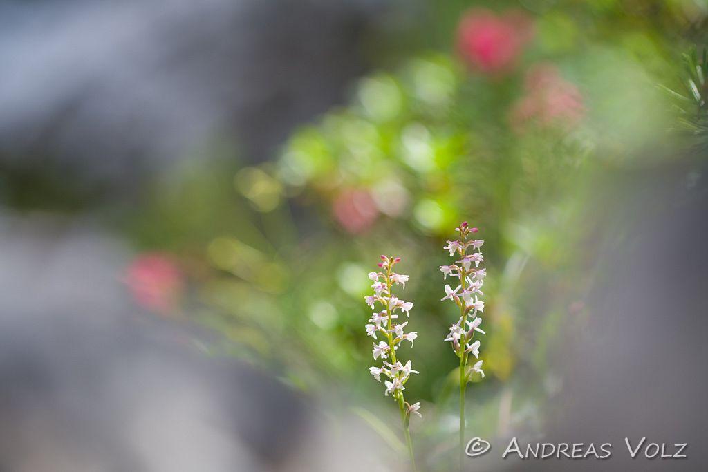Pflanzen1041.jpg