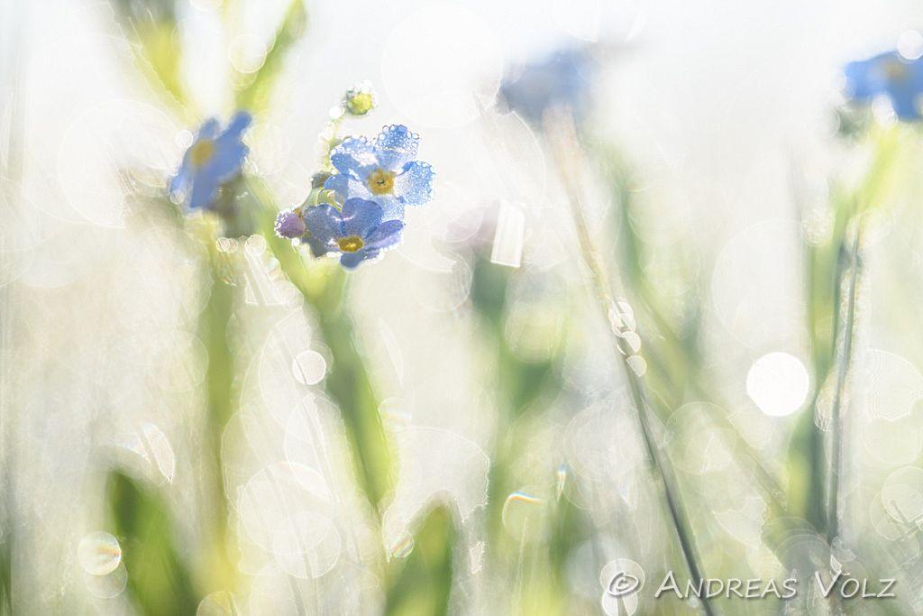 Pflanzen1082.jpg